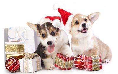 5 regals per gossos | Celebra el nadal amb el teu millor amic