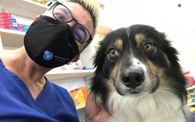 8 mesures preventives pel veterinari | COVID-19