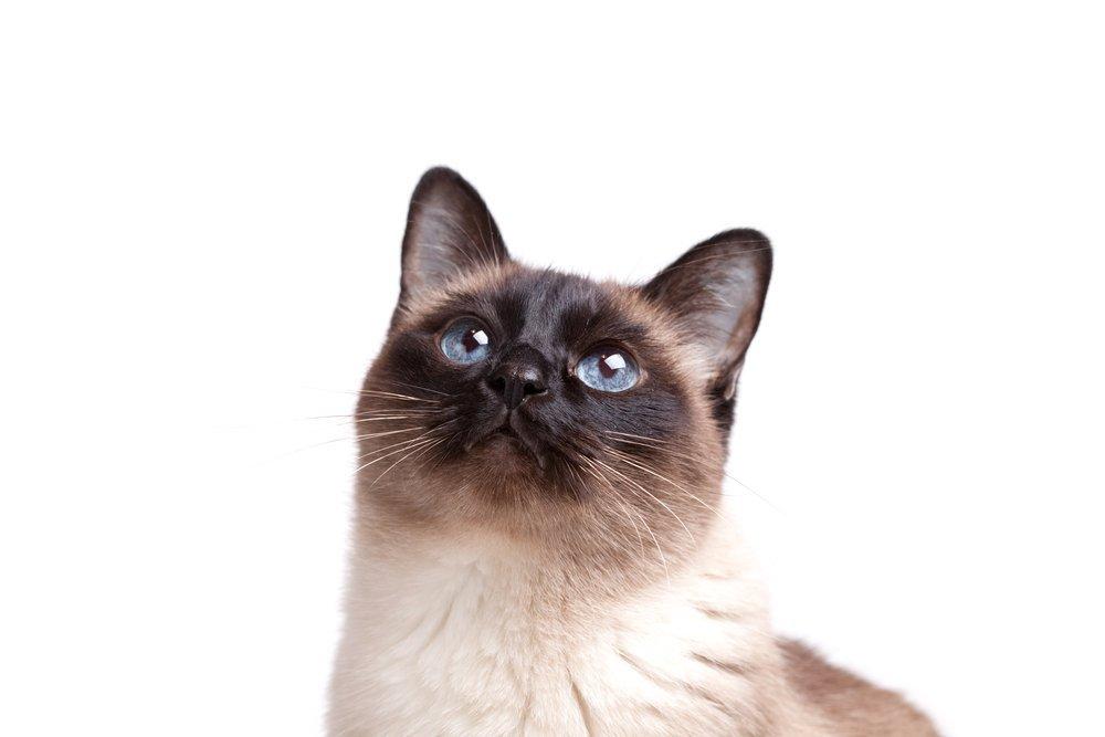 6 vacunas importantes para gatos y cuándo ponerlas