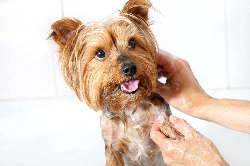 Com banyar a un gos si no li agrada l'aigua?|Consells canins