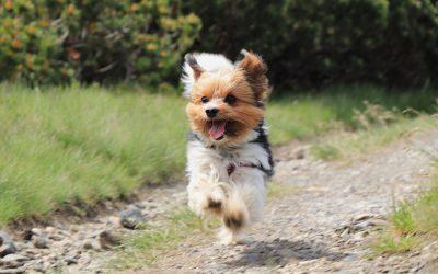 Vitamines per a gossos | Quan es poden prendre?